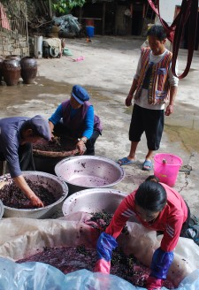 <b><p>Wu Gongdi's family crushing grapes.</b></p> After piling all of the grapes harvested from the vineyards in the household courtyard, the grapes are crushed by hand in large plastic or metal basins.