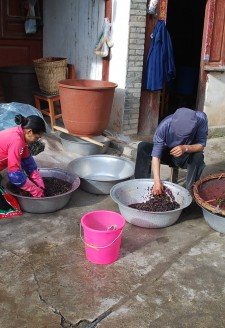 <b><p>Wu Gongdi's daughter-in-law crushing grapes, while he himself picks out the stems from the already crushed fruit.</b></p> Some seniors have recalled that locals previously chose to use a large wooden stick to crush grapes in wooden barrels before the 1950's. The wooden basins have been abandoned for weight consideration and economics in contemporary times.