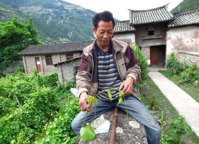 <b><p>Collecting 'Rose Honey' grape cuttings from the walled church yard vineyard.</b></p> Winemaking is an important cultural activity in Cizhong. For over a decade, it has been used in daily household consumption and to serve guests who visit the village, which receives large numbers of tourists each year. Because of its association with village religious identity, wine is a very popular drink to serve to guests. Furthermore, Cizhong villagers are eager to share and discuss the history of wine and winemaking with visitors.