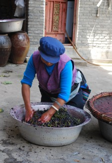 <b><p>Wu Gongdi's wife vigorously crushing grapes.</b></p> With keen entrepreneurial talent and as an expert of grafter of fruit trees, Wu Gongdi, the director of the Cizhong Church Management Committee, started to learn to make wine from his aunt, who was a nun with the French and Swiss fathers in the upstream community of Yanjing in Tibet, prior to the 1950s. Wu Gongdi pioneered 'Rose Honey' grape cultivation with seedlings and cuttings taken from the original walled church vineyard in Cizhong's church grounds in 1998. His family currently plants 8 <em>mu</em> (5333 square meters) of vineyards terraced along slopes below the forested mountains next to his house. From 1998 to the present, Wu Gongdi's family has produced an average of 2000 kilos of wine per year, one of the largest annual household wine outputs in Cizhong. It is agreed among domestic and foreign visitors that the alcohol content is between 10-20%, one alcohol company specifically measured the alcohol content of Wu Gongdi's wine as 18% in December 2014. The wine also fluctuates in taste and quality. Households all over Cizhong Village sell home-produced wine, and villagers are very proud of their ability to produce natural and organic products, contrary to other wine found in the region and discussed below.