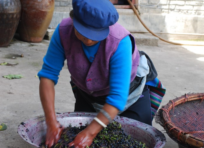 <b><p>Wu Gongdi's wife vigorously crushing grapes.</b></p>