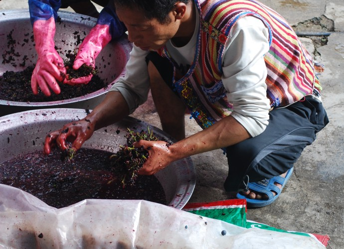 <b><p>Picking the stems from the crushed grapes.</b></p>