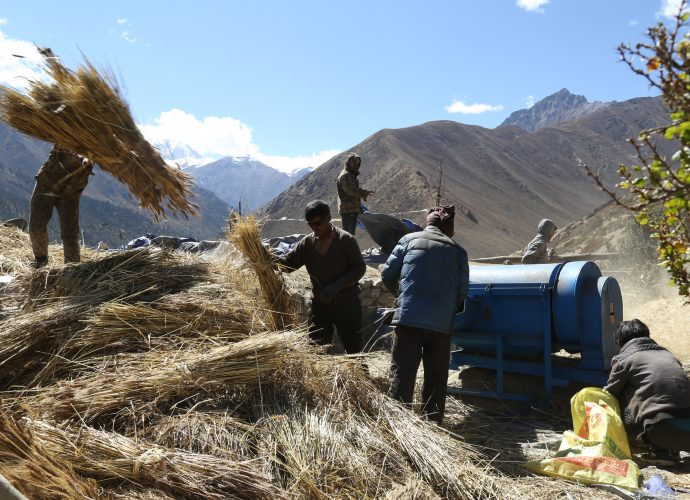 Yari, October 2017.  Although many of the commodities brought in from China are perishable food items, groups of households in Yari have pooled money to buy heavy machinery like this threshing machine. Weeks of work can be accomplished in a day with this machine, which requires nothing more than fuel and a handful of people feeding it. Threshed hay-grain mixture is then winnowed traditionally using the wind. Apart from the difficult logistics of arranging petrol, we noticed evidence of machines breaking down with different parts abandoned all over the village. This raises questions about the reliability and feasibility of new technologies in the region. Locals, at least for now, seem to enjoy these gifts of the market economy.