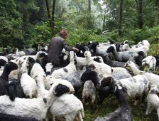 A Day in the Life of a Herder in West Sikkim
